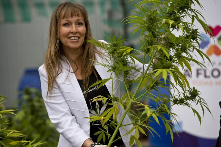 The president of the Daya Foundation, a local non-profit organization, Ana Maria Gazmuri, shows a cannabis plant at a lab in Santiago on April 7, 2015. Chile's congressional health committee approved a bill Monday that would legalize the cultivation of marijuana for private recreational or medicinal use, sending it to the floor for a full debate. The bill would take marijuana off the list of hard drugs in the socially conservative country and make it a soft drug like alcohol. It would allow people over the age of 18 to grow up to six cannabis plants for their own use, or for use by minors if they are patients using the substance as part of a prescribed treatment regimen.   AFP PHOTO / MARTIN BERNETTI